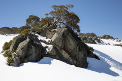 Boulders and Snow Gums, Charlotte Pass, New South Wales Royalty Free Stock Photo