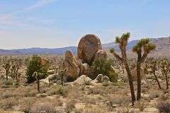 Desert Boulders tree Stock Images
