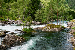 Boulders with vegetation in a river Royalty Free Stock Image