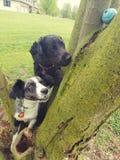 Boule de chienchiens coincée dans l'arbre ! images stock