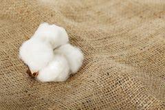 Boule de coton Photo stock