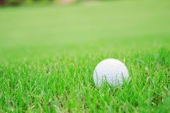 Boule de golf sur la pelouse verte Photo stock