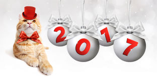 Boule de Noël de chat et d'argent de gingembre avec le ruban argenté de satin Image libre de droits