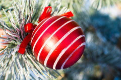 Boule rouge de décorations de Noël grande sur l'arbre de Noël extérieur Images stock
