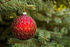Boule rouge de Noël sur l'arbre de Noël photos libres de droits