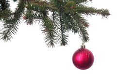 Boule rouge de Noël sur la branche verte d'isolement Photos stock