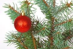 Boule rouge sur l'arbre de Noël Photographie stock libre de droits