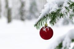 Boule rouge sur un arbre de Noël dans une forêt sauvage photos libres de droits