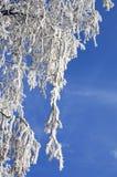 Bouleau avec le hoar en plan rapproché de l'hiver images libres de droits
