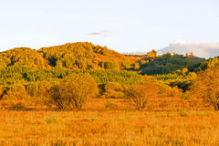 Bouleau blanc et prairie photo stock