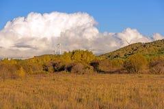 Bouleau blanc et prairie image libre de droits