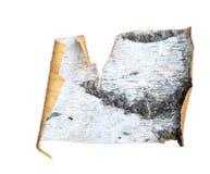 bouleau d'écorce Image libre de droits