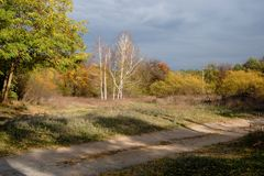 Bouleau dans l'automne Photographie stock
