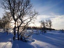 Bouleau de montagne d'hiver Photographie stock libre de droits