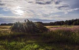 Bouleau de vent cassé au coucher du soleil dans le pré Image libre de droits