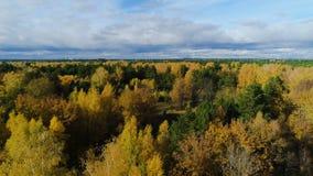 Bouleau jaune de vue aérienne et forêt à feuilles persistantes sous le ciel banque de vidéos