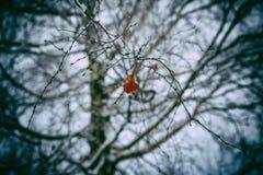 Bouleau orange sec Photo stock