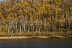 Bouleau près du lac Photos stock