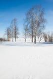 Bouleaux contre le ciel bleu en hiver Photos stock