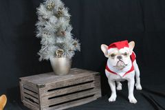 Bouledogue français Santa Photos libres de droits
