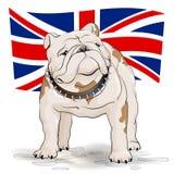 Bouledogue mignon sur le fond du drapeau anglais Photographie stock libre de droits