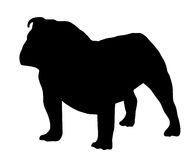 Bouledogue noir de silhouette Images stock