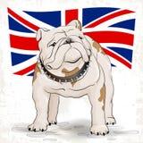 Bouledogue sur un fond du drapeau britannique Image stock