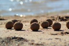 Boules arénacées abstraites sur la plage sablonneuse Images stock