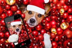 Boules de chien et de Noël du père noël de Noël comme fond Images stock
