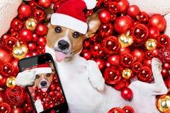 Boules de chien et de Noël du père noël de Noël comme fond Photographie stock