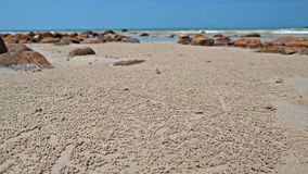 Boules de crabe de barboteur de sable sur la plage Images stock