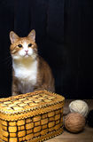 Boules de fil et de chat de laine photographie stock libre de droits