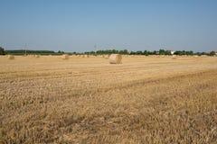 Boules de foin dans un domaine de blé Photographie stock