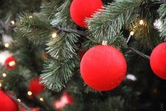 Boules rouges sur un arbre de Noël vert Image stock
