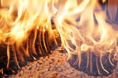 Boulettes en bois Photo stock