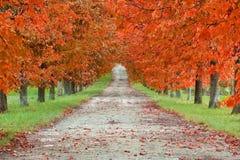 Boulevard di autunno Fotografie Stock