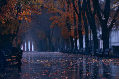 Boulevard di autunno nella pioggia fotografia stock