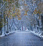 Boulevard di inverno di autunno immagine stock libera da diritti