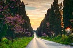 Boulevard diritto famoso dell'albero di cipressi di Bolgheri sul tramonto marzo fotografia stock