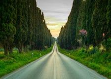 Boulevard droit célèbre d'arbre de cyprès de Bolgheri sur le coucher du soleil. Mars Photo libre de droits