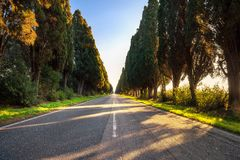 Boulevard för raksträcka för Bolgheri berömd cypressträd Maremma Tusc royaltyfria bilder