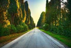 Boulevard för raksträcka för Bolgheri berömd cypressträd Maremma Tusc royaltyfri foto