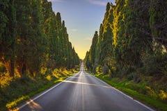 Boulevard för raksträcka för Bolgheri berömd cypressträd Maremma Tuscany, Italien royaltyfria foton