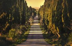 Boulevard för raksträcka för Bolgheri berömd cypressträd Maremma Tuscany, Italien arkivfoto
