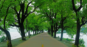 Road by the lake. A boulevard on the lake.Its summer,so the trees are green Stock Image