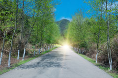 On the Boulevard of light Royalty Free Stock Image