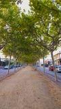 Boulevard med träd Royaltyfria Bilder