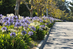 Boulevard median has flowers and trees Royalty Free Stock Image