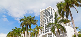 Boulevard in Miami Beach, Florida, USA with tall palms and white buildings. Royalty Free Stock Image
