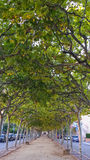 Boulevard mit Bäumen Lizenzfreie Stockfotos
